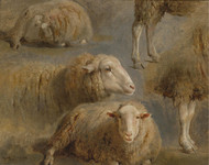 Art Prints of A Study of Sheep by Rosa Bonheur