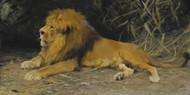 Art Prints of Lion in His Den by Wilhelm Kuhnert