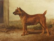 Art Prints of Irish Terrier by William Henry Hamilton Trood