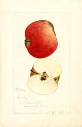 Art Prints of Brady Apples by William Henry Prestele