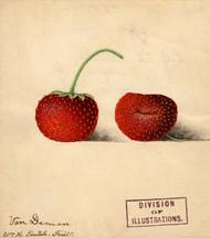 Art Prints of Van Deman Strawberries by William Henry Prestele