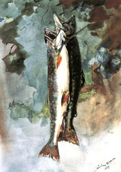 Art Prints of Two Trout by Winslow Homer