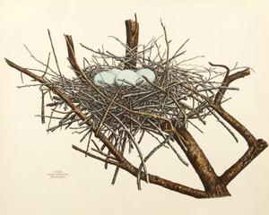 Art Prints of Green Heron Nest, Plate XXVII, American Bird Nests