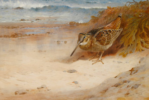 Art Prints of Hungry and Homeless by Archibald Thorburn