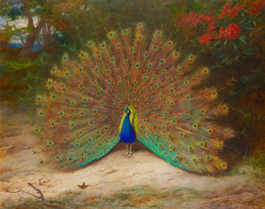 Art Prints of Peacock and Peacock Butterfly by Archibald Thorburn