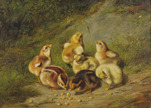 Art Prints of Baby Chicks by Arthur Fitzwilliam Tait