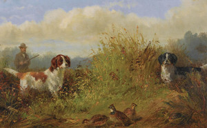 Art Prints of Quail Shooting, the Point by Arthur Fitzwilliam Tait