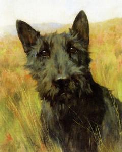 Art Prints of A Scottish Terrier by Arthur Wardle