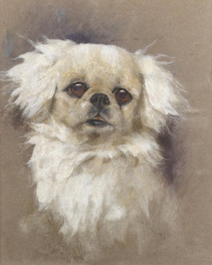 Art Prints of A Pekingese by Arthur Wardle