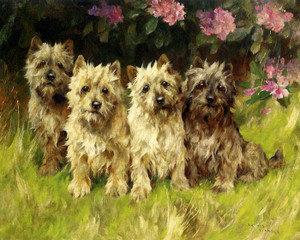 Art Prints of Cairn Terriers by a Rhododendron Bush by Arthur Wardle