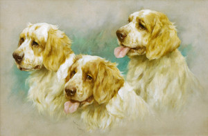 Art Prints of Clumber Spaniels by Arthur Wardle