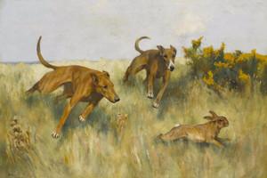 Art Prints of Coursing by Arthur Wardle