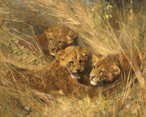 Art Prints of Lion Cubs by Arthur Wardle