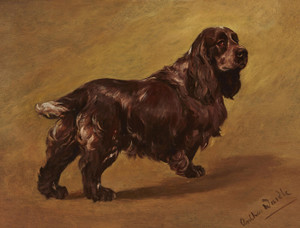 Art Prints of Shillington Rona, a Field Spaniel by Arthur Wardle