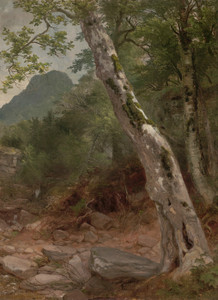 A Sycamore Tree, Plaaterkill Clove by Asher Brown Durand | Fine Art Print
