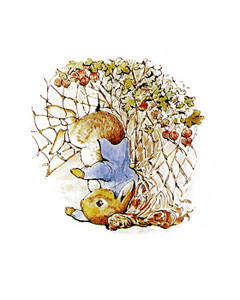 Art Prints of Peter Caught Upside Down in a Gooseberry Net by Beatrix Potter