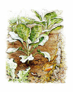 Art Prints of Peter's Lost Shoe in the Garden by Beatrix Potter