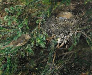 Art Prints of Song Thrush at Nest by Bruno Liljefors