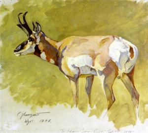 Art Prints of Antelope No. 1 by Carl Rungius