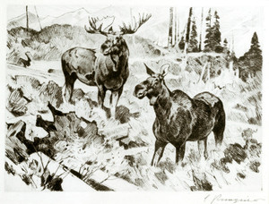 Art Prints of Alaskan Moose by Carl Rungius