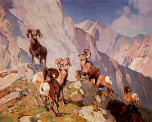 Art Prints of Bighorn Sheep No. 2 by Carl Rungius