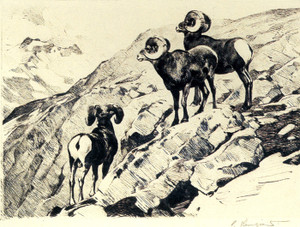 Art Prints of Cliff Dwellers by Carl Rungius