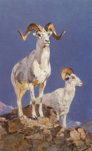 Art Prints of Dall Sheep by Carl Rungius