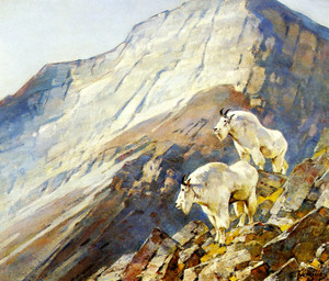 Art Prints of Mountain Goats by Carl Rungius