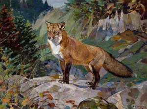 Art Prints of Red Fox by Carl Rungius