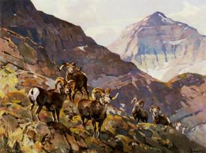 Art Prints of Stone Sheep by Carl Rungius