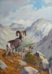 Art Prints of Bighorn and Mountain Goat by Carl Rungius