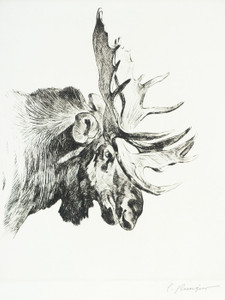 Art Prints of Old Bull by Carl Rungius