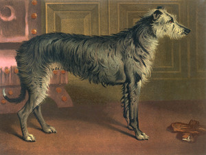 Art Prints of Deerhound by Vero Shaw