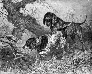 Art Prints of German Pointers by Vero Shaw