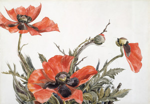 Art Prints of Red Poppies by Charles Demuth