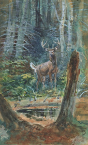 Art Prints of Deer in the Dell by Charles Marion Russell