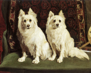 Art Prints of Pair of German Spitz Before an Oriental Rug by Charles Van den Eycken