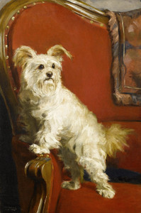 Art Prints of Toy Terrier in a Red Chair by Charles Van den Eycken