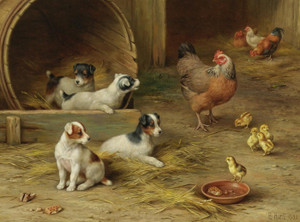 Art Prints of Puppies and Chickens by Edgar Hunt