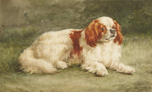 Art Prints of Blenheim Cavalier King Charles Spaniel by Edmund Henry Osthaus