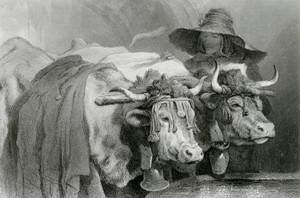 Art Prints of Oxen at the Tank Geneva by Edwin Henry Landseer