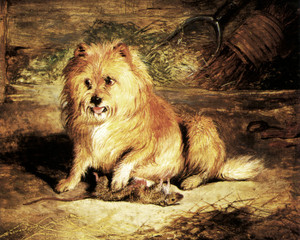 Art Prints of Vixen by Edwin Henry Landseer