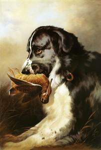 Art Prints of Newfoundland and Woodcock by Edwin Henry Landseer