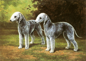 Art Prints of Bedlington Terriers by Edwin Megargee