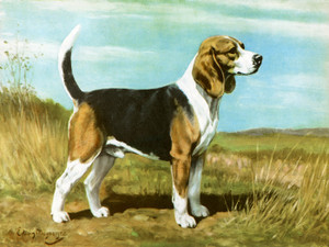 Art Prints of Beagle by Edwin Megargee