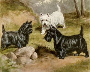 Cairn, West Highland White and Scottish Terriers by Edwin Megargee | Fine Art Print