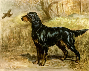 Art Prints of Gordon Setter by Edwin Megargee