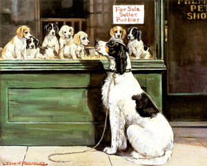 Art Prints of Puppies for Sale, English Setters by Edwin Megargee