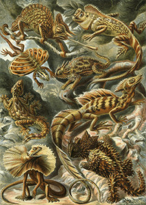 Art Prints of Lacertilia or Lizards, Plate 79 by Ernest Haeckel