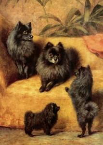 Art Prints of Pomeranians by Frances Fairman
